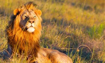 媽媽,媽媽,我想成為一隻獅子。