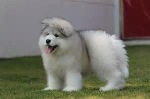 有一天,我看到一隻隱形小狗