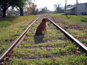 那一隻鐵道上的小狗