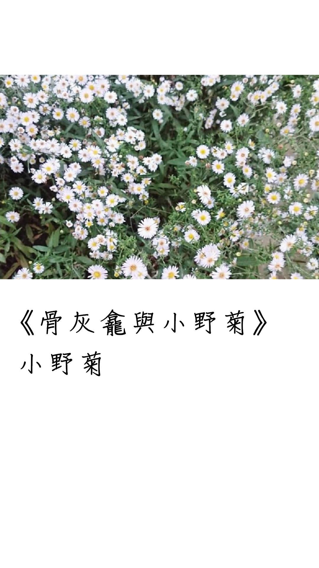 骨灰龕與小野菊