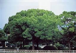 【140字小說】木